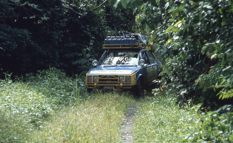 15-through rain forest